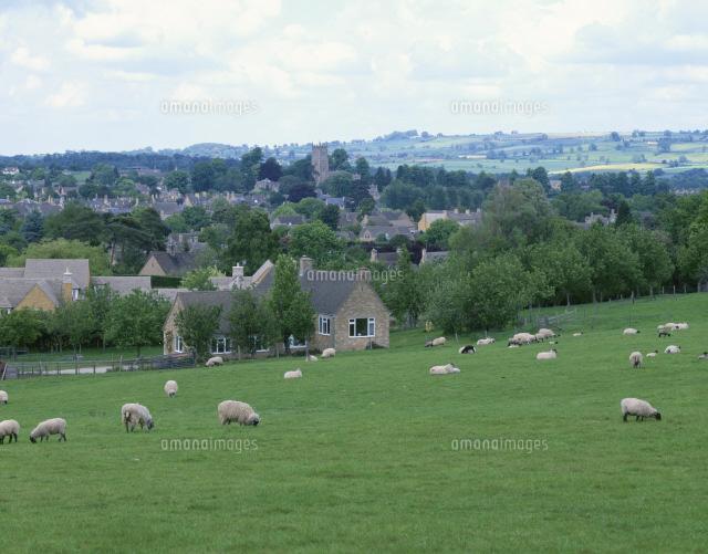 羊とチッピング・カムデンの村 ...