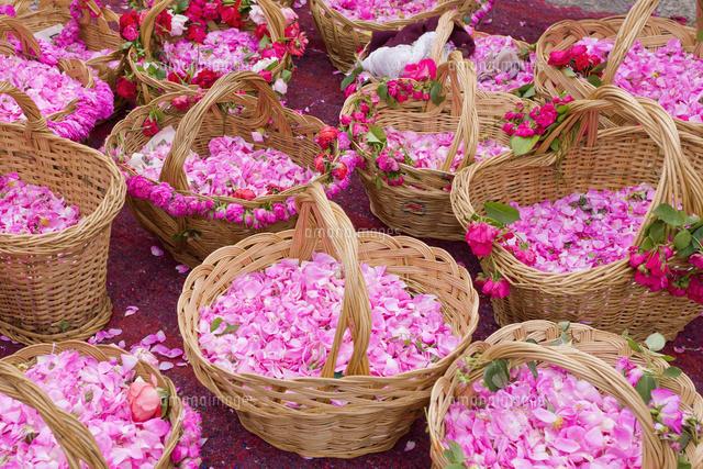 バラ祭り ダマスクローズの花かご25210010364の写真素材イラスト