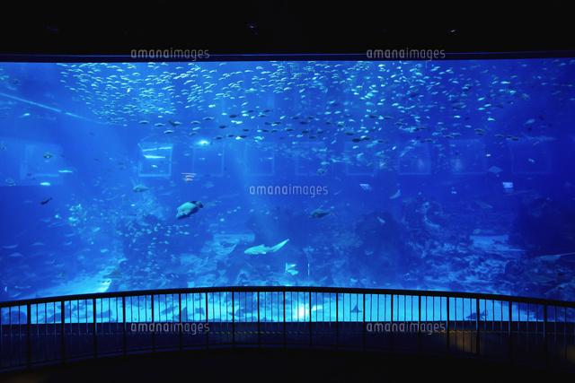 シーアクアリウム25210011100の写真素材イラスト素材アマナ