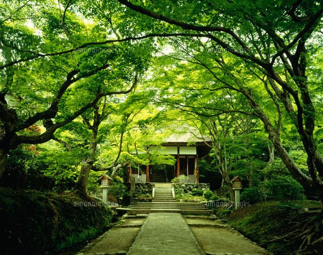 「常寂光寺」の画像検索結果