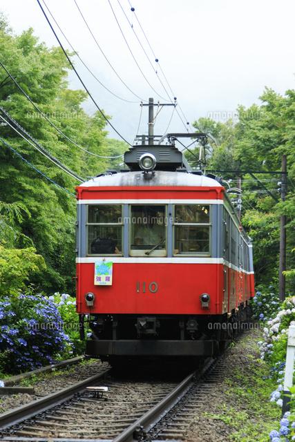 アジサイと箱根登山鉄道25388014052の写真素材イラスト素材アマナ