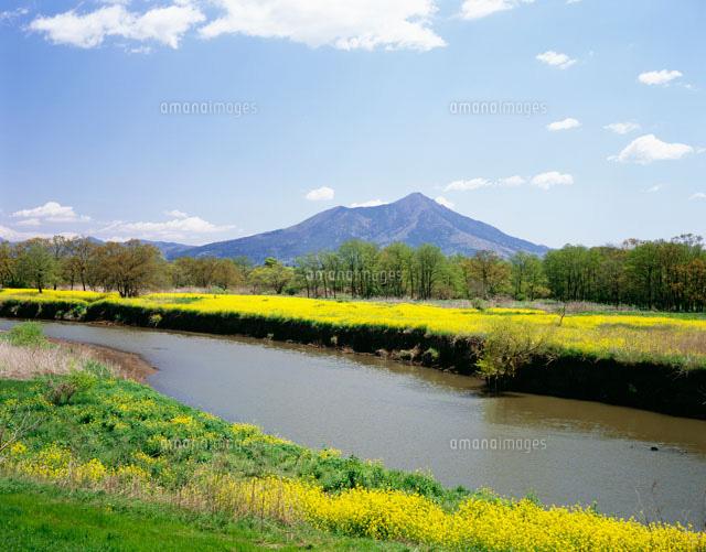菜の花咲く小貝川と筑波山[25391...