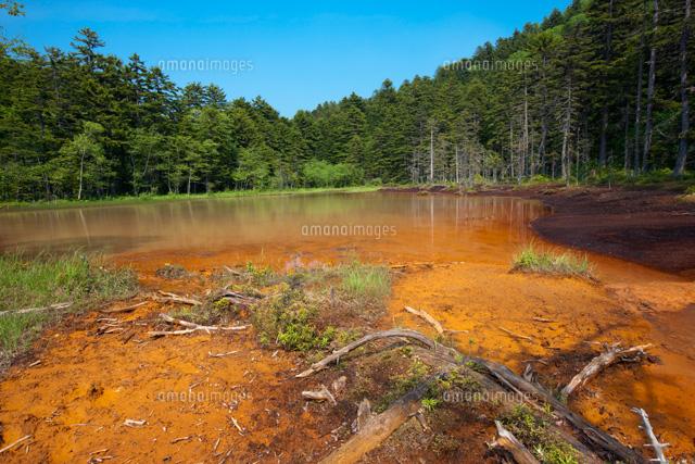 褐鉄鉱の堆積地 錦沼と原生林[25...
