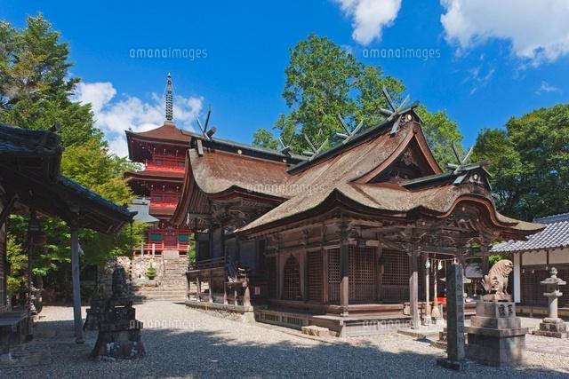 柏原八幡神社 拝殿と本殿と三重...