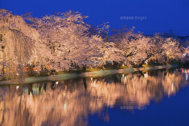 桜咲く臥竜公園ライトアップ[255...