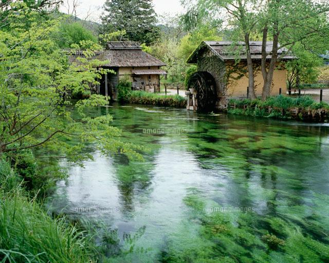万水川と水車小屋[25747012787]...
