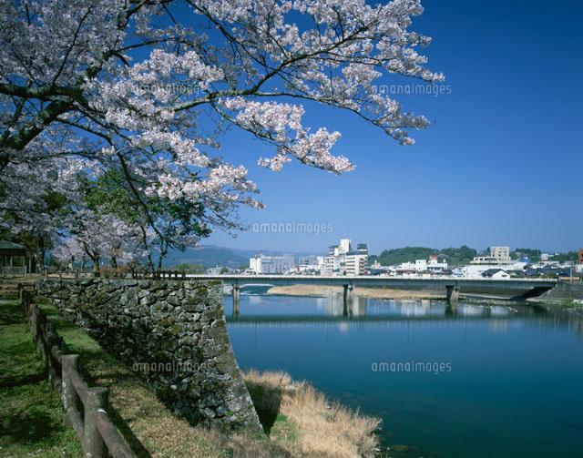 人吉城跡の桜と球磨川 人吉市[25778016210]| 写真素材・ストック ...