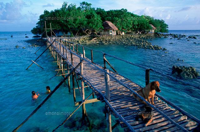 マングローブの森と桟橋 黒珊瑚...