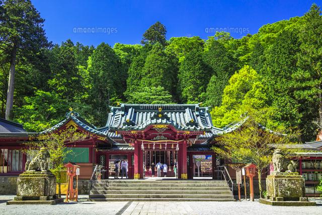 箱根神社の本殿25991005213の写真素材イラスト素材アマナイメージズ