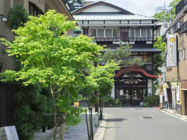 箱根湯本 温泉街26033005083の写真素材イラスト素材アマナイメージズ