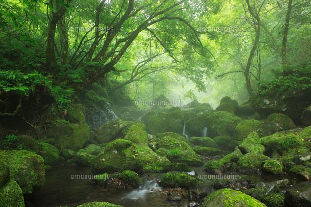 源流と霧の森 元滝