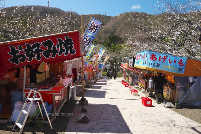 函館公園の桜と出店26120044380の写真素材イラスト素材アマナ