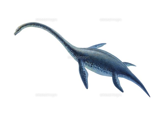 エラスモサウルス[32041000009]...