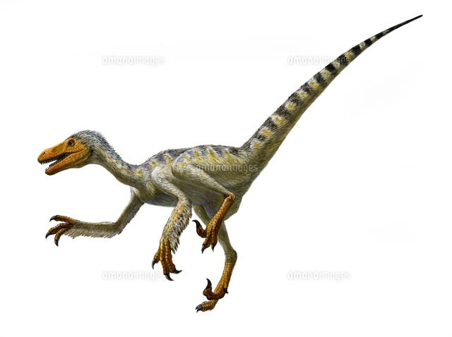 ドロマエオサウルス[32041000042...