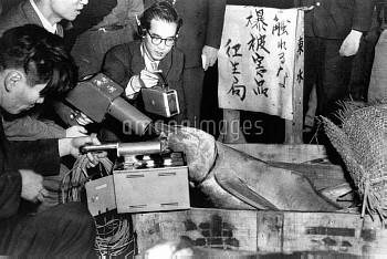第五福竜丸 マグロの放射能検査(撮影年月日不明)【要事前申請】