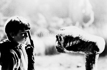 E.T., (aka E.T.: THE EXTRA-TERRESTRIAL), from left, Henry Thomas, E.T., 1982, ©Universal Pictures/co