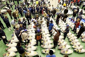 東京・豊洲市場で初競り マグロの競り【要事前申請(TV番組および新聞記事使用不可)】
