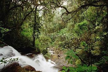 Sakaroa Falls in rainforest, Ranomafana National Park, Madagascar