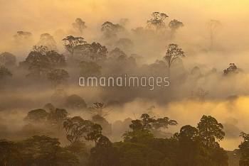 Lowland dipterocarp rainforest at dawn. Danum Valley, Sabah, Borneo, May 2011.