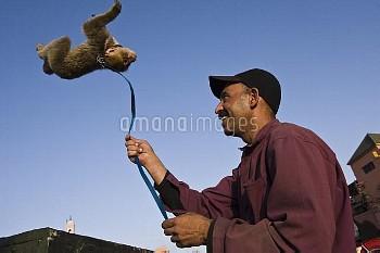 Man with performing pet Barbary ape (Macaca sulvanus) Morocco, June 2009;NATA_CITES_201611
