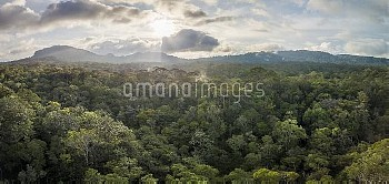 Batang Toru forests, North Sumatra, Indonesia.  This forest is home to a newly identified species of