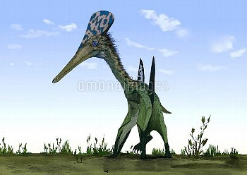 Pterodactylus, artwork