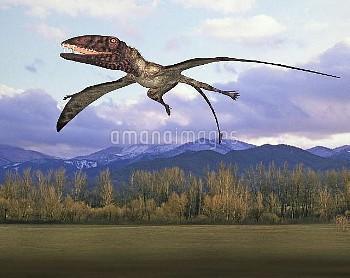 Dimorphodon pterosaur, illustration