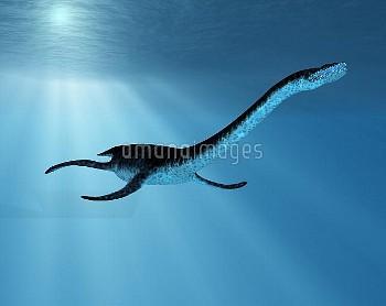 Plesiosaurus dinosaur, illustration