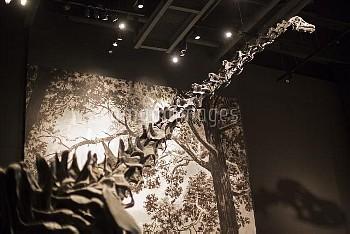 Sauropod dinosaur fossil display