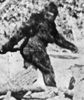 Bigfoot.  from the famous short film, made by Roger Patterson in 1967 in northern California.  Grov