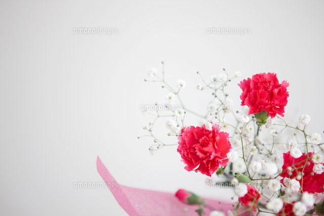 カーネーションとかすみ草の花束07800006117の写真素材イラスト素材