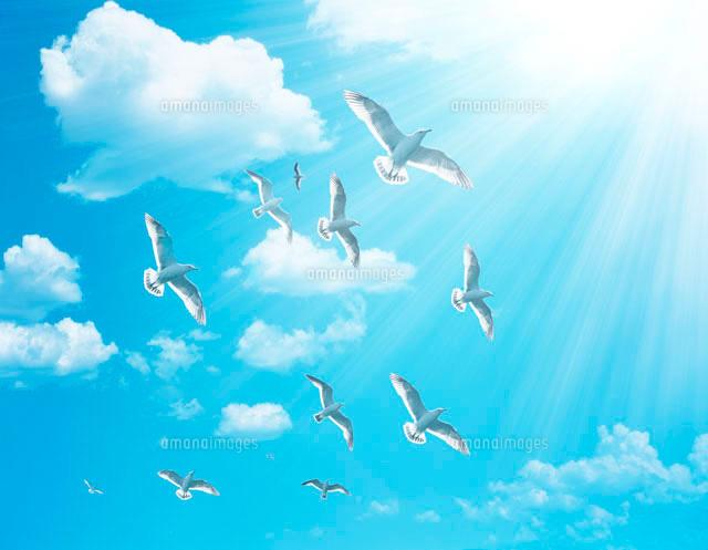 飛ん でる 鳥 イラスト