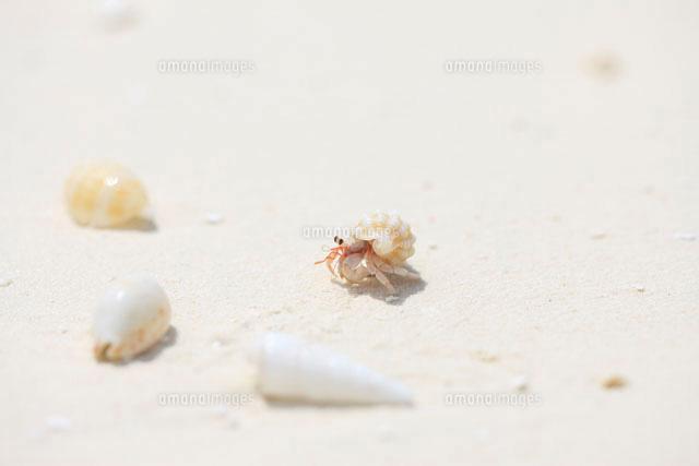 モルディブのビーチを散歩するヤドカリ09521000615の写真素材