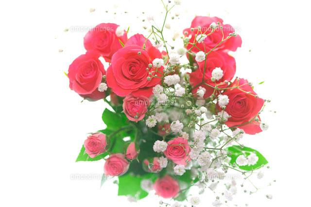 赤いバラとカスミソウの花束10146000546の写真素材イラスト素材
