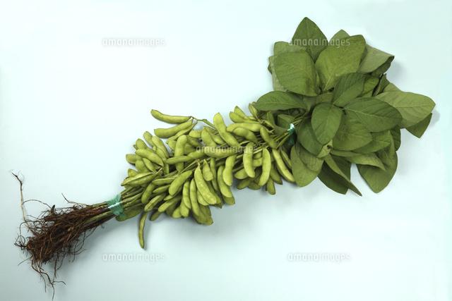 新潟県産の枝豆10149001577の写真素材イラスト素材アマナ
