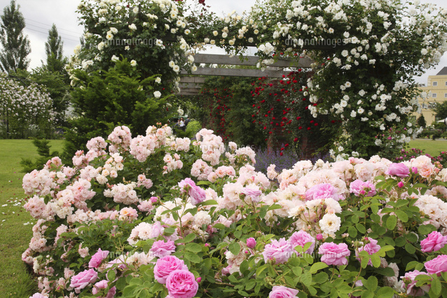 みつけ イングリッシュ ガーデン