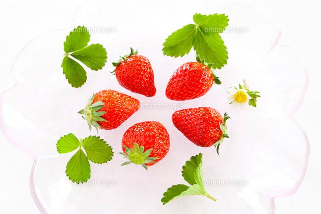 イチゴの実と葉 の写真素材 イラスト素材 アマナイメージズ