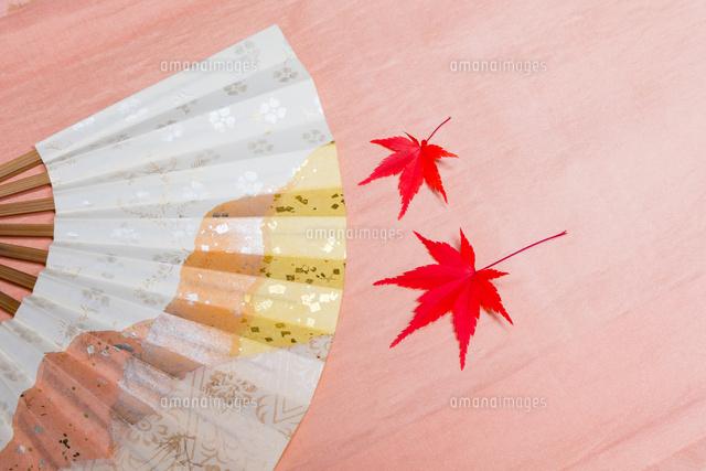 扇とカエデと着物の帯10158005587の写真素材イラスト素材アマナ
