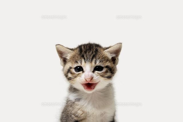 子猫10168003868の写真素材イラスト素材アマナイメージズ