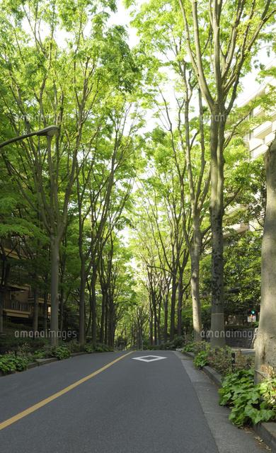 ケヤキ並木の坂道10168003999の写真素材イラスト素材アマナイメージズ