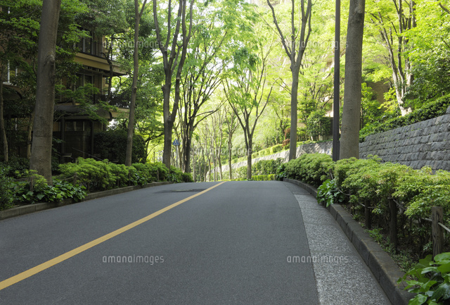 ケヤキ並木の坂道10168004001の写真素材イラスト素材アマナイメージズ