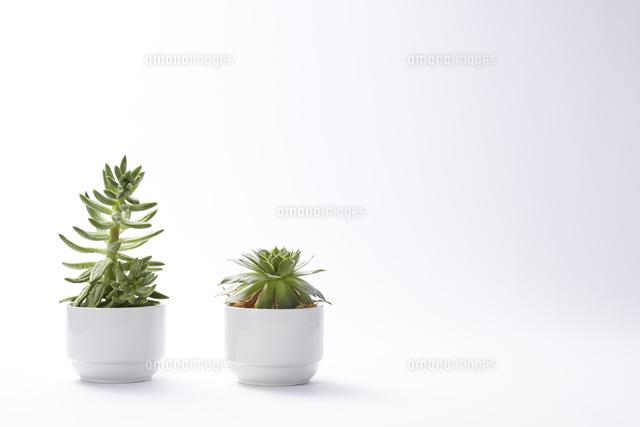 鉢植えのサボテンと多肉植物10179008095の写真素材イラスト素材
