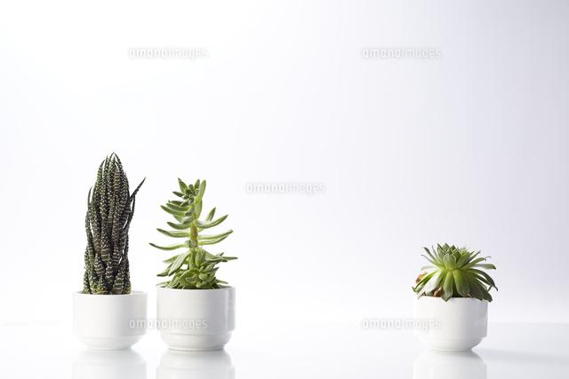 鉢植えのサボテンと多肉植物10179008099の写真素材イラスト素材