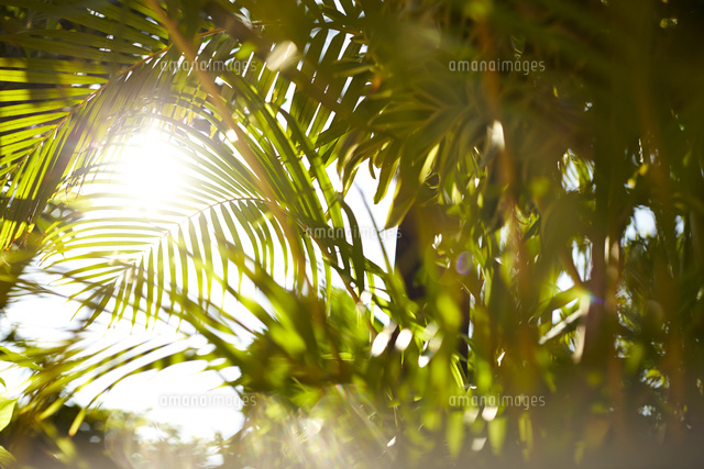 ヤシの木と夏の日差し10179009827の写真素材イラスト素材アマナ