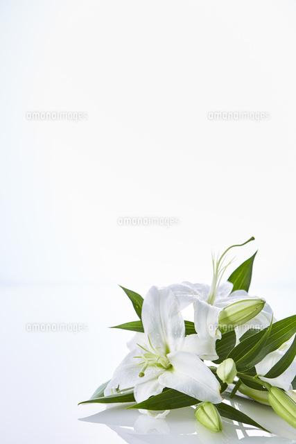 反射する板に置かれたユリの花10179013072の写真素材イラスト素材
