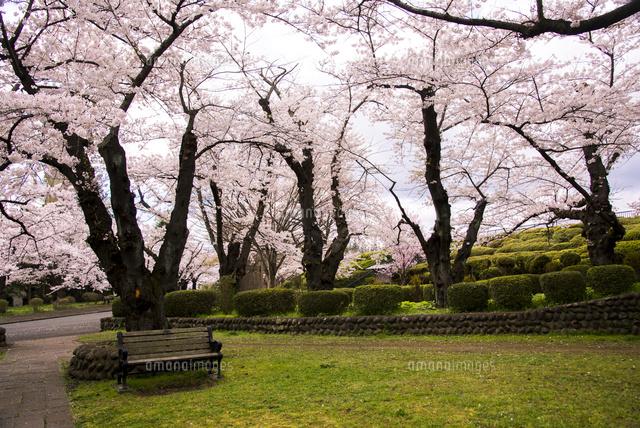 「水沢公園 桜」の画像検索結果