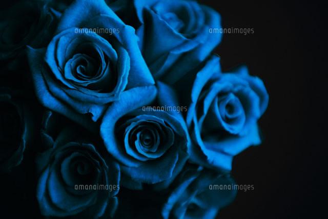 青いバラ10250000744の写真素材イラスト素材アマナイメージズ