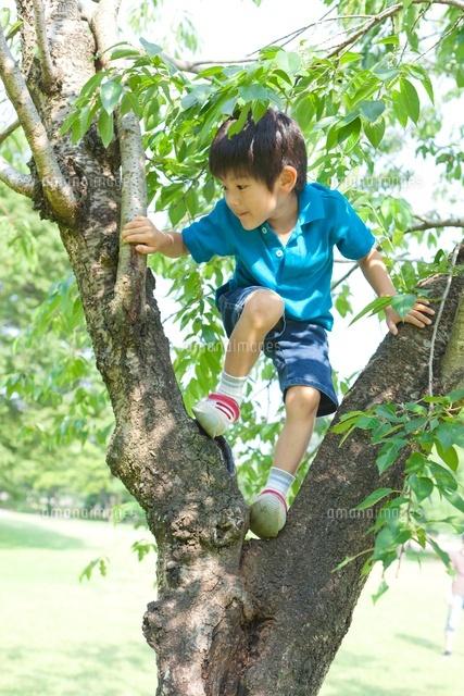 木登りをする日本人の男の子10272003256の写真素材イラスト素材