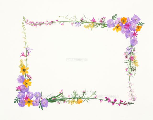 花で作ったフレーム10285000429の写真素材イラスト素材アマナ