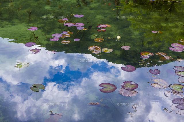 モネの池10410001535の写真素材イラスト素材アマナイメージズ